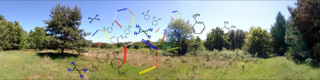 Ist die Heide mit krebserregenden Stoffen kontaminiert?